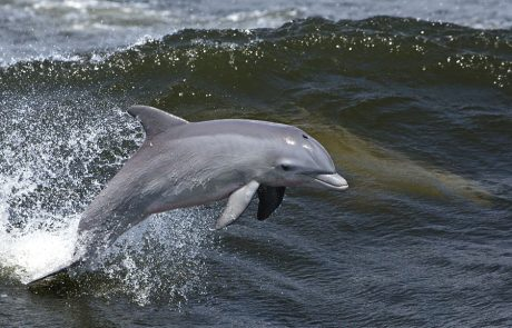 Wales Coast Path: Bottlenose dolphins