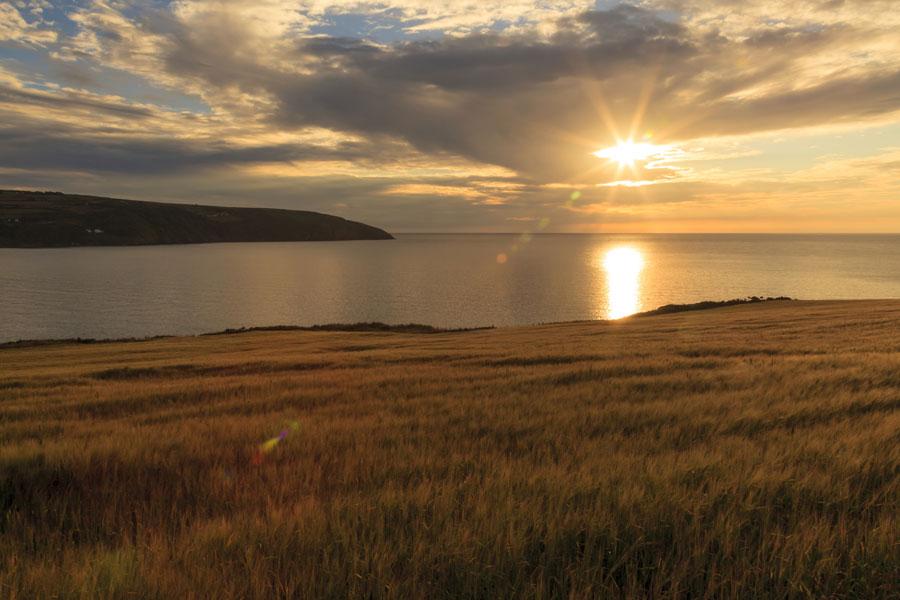 Cemaes Head, Pembrokeshire