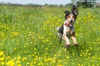 Best dog walks in Wales