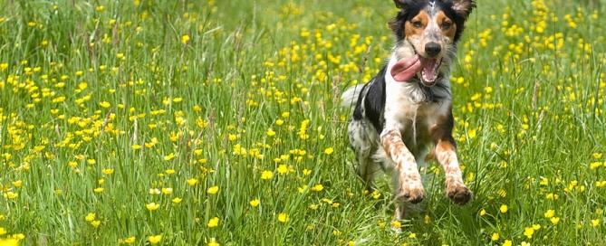 Best dog walks in Wales