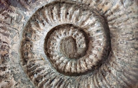 Wales Coast Path: ammonite fossil, Glamorgan Heritage Coast