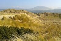 Morfa Dyffryn dunes
