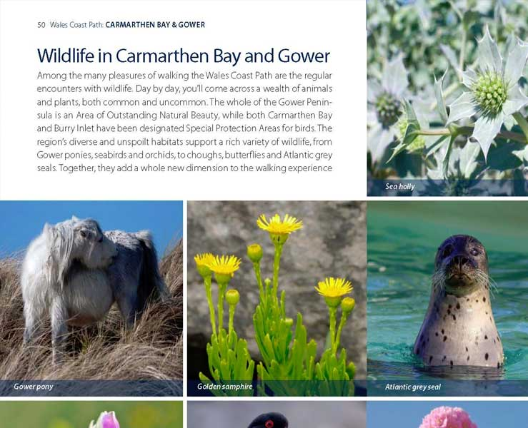 Wales Coast Path: Official Guide Carmarthen Bay and Gower