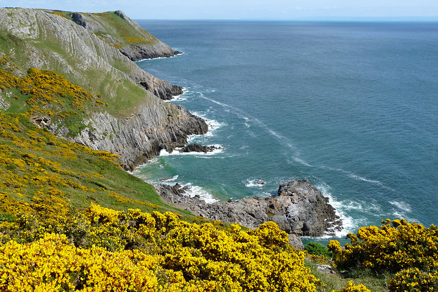 Cliffs and gorse at Pennard, Gower